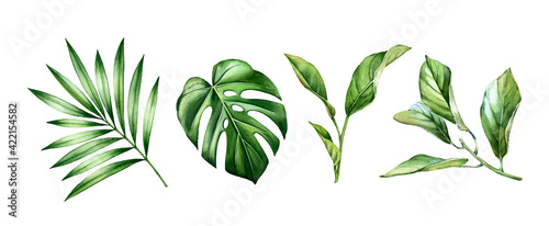 Obraz na plátně Watercolor leaves set