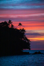 Sunset Over The Sea With Palmtree