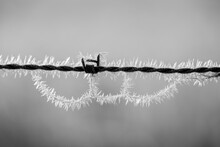 Barbed Wire With Morning Ice