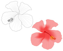 Close-up Image Of A Hibiscus Flower In Two Versions