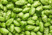 Fresh Green Hops As Background