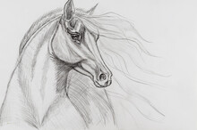 Pencil Drawing Of A Horse On White Paper.