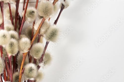 Obraz Bazie na białym tle - fototapety do salonu