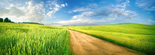 Beautiful Summer Rural Natural Landscape With Fields Young Wheat, Blue Sky With Clouds. Warm Fresh Morning And Road Stretching Into Distance. Panorama Of Spacious Hilly Area.