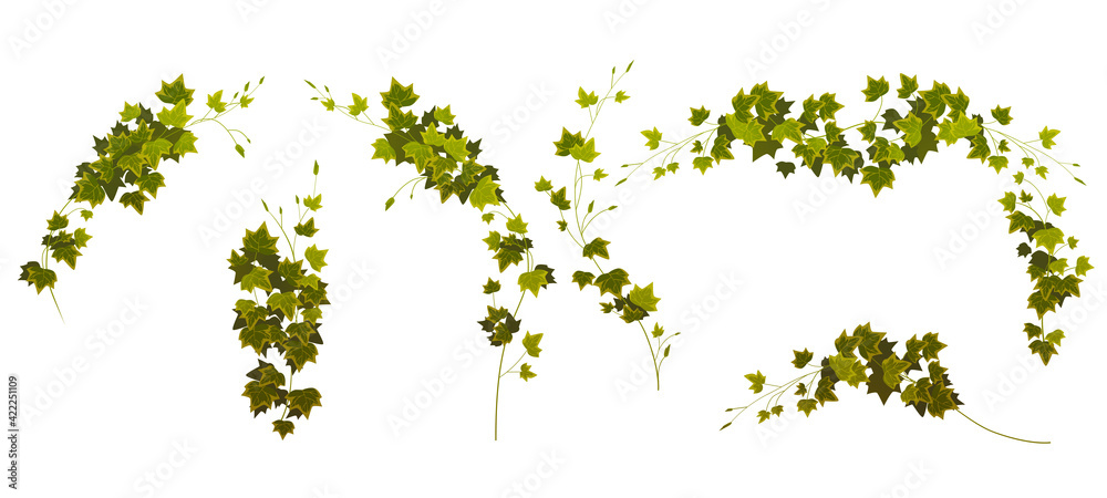 Fototapeta Ivy vines corners and borders, creepers branches