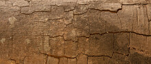 Abstract Background, Cracks In The Bark Of The Tree Trunk Texture. For Graphic Design, Space For Text.