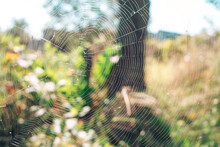 Cobweb Or Spider's Web Against A Natural Background.