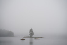 Lonely Tree In The Water, In This Foggy Landscape In Sweden
