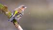 canvas print picture - bird, natur, wild lebende tiere, ast, rot, wild, tier, baum,