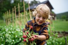 Small Boy Holding Radishes In Vegetable Garden, Sustainable Lifestyle.
