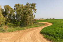 Left Turn Of The Dirt Road Enveloping A Eucalyptus Grove Next To A Green Field