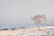 Lone Tree In Winter, White Edge, Peak District, UK