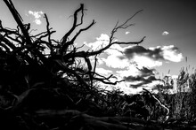 Rural Landscape With Dried Tree Roots And Sky