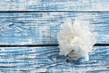 White Chrysanthemum On A Blue Wooden Background, Aged Boards, Copy Space