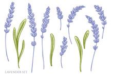 Vector Set Of Hand Drawn Pastel Lavender