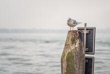 Um Pássaro No Mar