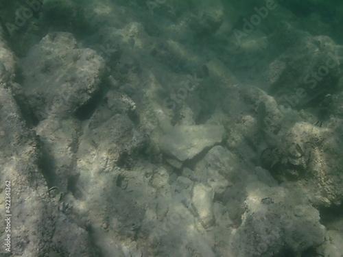 Fototapeta Underwater wrld obraz