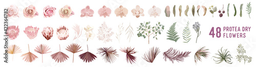 Obraz Dried pampas grass, rose, protea, orchid flowers, tropical palm leaves vector bouquets - fototapety do salonu