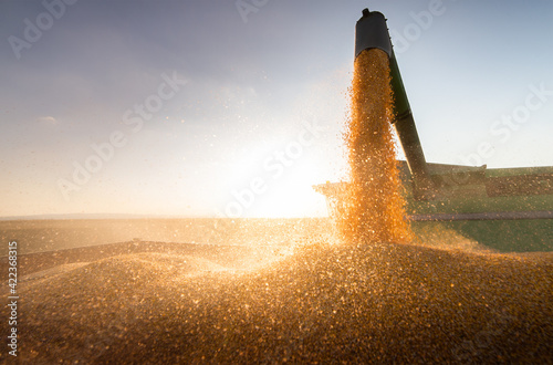 Fotografia Combine harvester in evening action