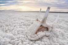 Small Plastic Chair Completely Covered With Crystalline Salt On Shore Of Dead Sea, Closeup Detail