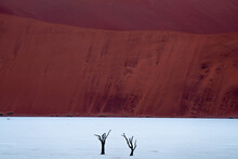 Two Dead Camelthorn Trees In Deadvlei, Namibia