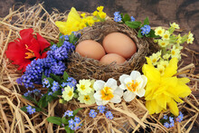 Birds Nest With Brown Eggs & Spring Flowers Of Primroses, Narcissus, Daffodils, Forget Me Nots, Grape Hyacinths & Tulip Flowers On Rustic Wood Background. Springtime Rebirth Composition.