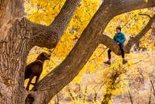 A Girl And Her Dog Climbing A Tree At The Box Elder Recreation Site, Dolores River Canyon, Dove Creek, Colorado.