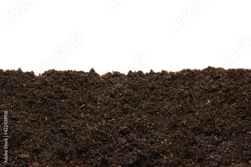Fototapeta Peat moss isolaetd on white background obraz