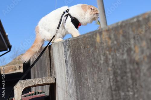 Foto 塀に登る猫