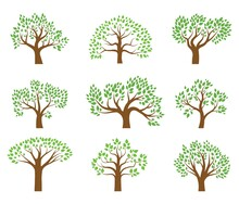 Trees With Green Leaves And Various Crown Shapes. Set Of Color Vector Illustrations