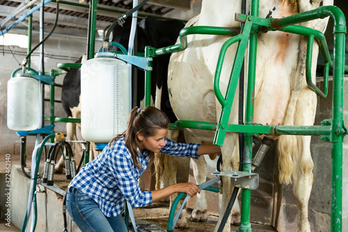 Fotografia, Obraz Young milker operating machine milking in livestock barn