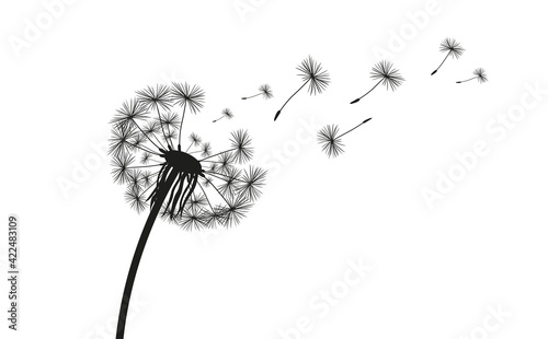 Valokuva Dandelion Silhouette