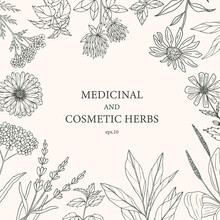 Hand Drawn Medicinal And Cosmetic Plants, Herbs. Botanical Banner, Decorative Background For Organic Cosmetics, Medicine.