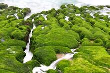 Laomei Green Reef, Volcanic Rocks With Seasonal Algae In Shimen District, New Taipei City, Taiwan