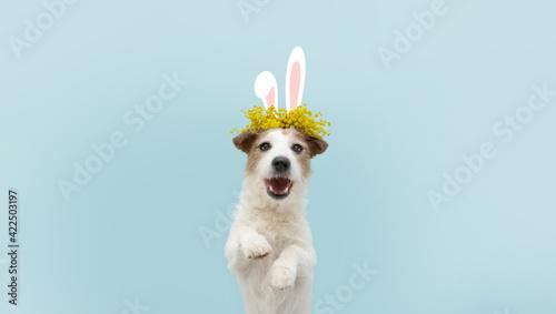 Happy easter dog spring Fototapet
