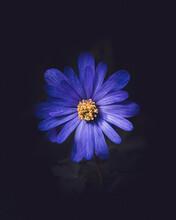 Jolie Fleur De Printemps