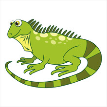 Chameleon. Cartoon Character Gecko Isolated On White Background. Template Of Cute Wild Animal. Education Card For Kids Learning Animals. Suitable For Decoration And Design. Vector In Cartoon Style.