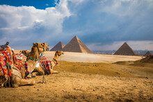 A Pair Of Colorful Blanketed Camels Rest Before Their Next Riders At The Giza Pyramids