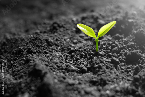 Tablou Canvas The seedlings are growing from fertile soil, environment concept.
