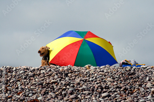 A dog and a beach umbrella in a pebbled beach in summer. Fototapet