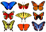 Cartoon butterflies. Flying colorful insects, spring butterfly moth insect, summer garden flying butterflies. Butterfly insects vector illustration set