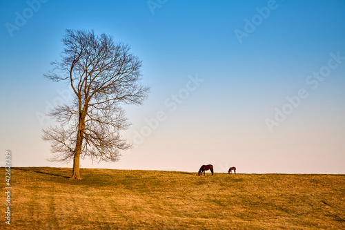 Fototapeta A mare and foal grazing on early spring grass. obraz