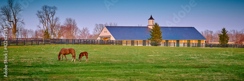 Obraz na plátně A mare and foal grazing on early spring grass with horse barn in the background