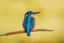 Kingfisher Perched On A Warm Seabed