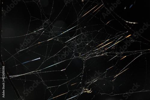 Fotografia Spinnennetz in der Sonne
