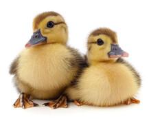 Two Little Yellow Ducklings.