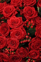 Red Bridal Roses With Drops
