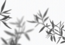 Realistic Vector Transparent Shadow Of Tree Leaves. Decorative Design Element For Presentations And Mockups. Creative Overlay Effect