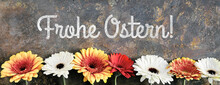 Easter Decorations, Text Frohe Ostern Means Happy Easter In German Language. Gerbera Flowers Behind Decorative Fence. Spring Arrangement On Textured Background. German Panoramic Easter Banner.