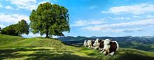 Milchkühe Auf Der Sommer Almwiese In Den Bergen